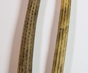 Deštná kaktusová slabá hůl 150 cm