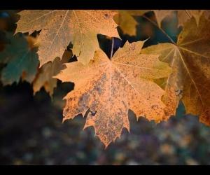 Leaf Sound Sculptures C# Mystic handpan